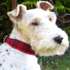 Alice modelling the Alice Foxx Mackintosh dog collar in red tartan pony hair