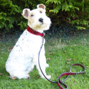 Alice modelling the Alice Foxx Mackintosh dog collar and lead in red tartan pony hair