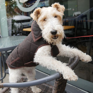 Alice modelling a brown Alice Foxx Chelsea waxed coton dog coat