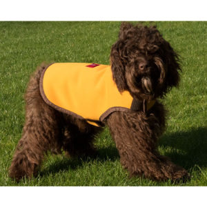 Vinnie walking in an Alice Foxx Neoprene yellow reversible dog coat